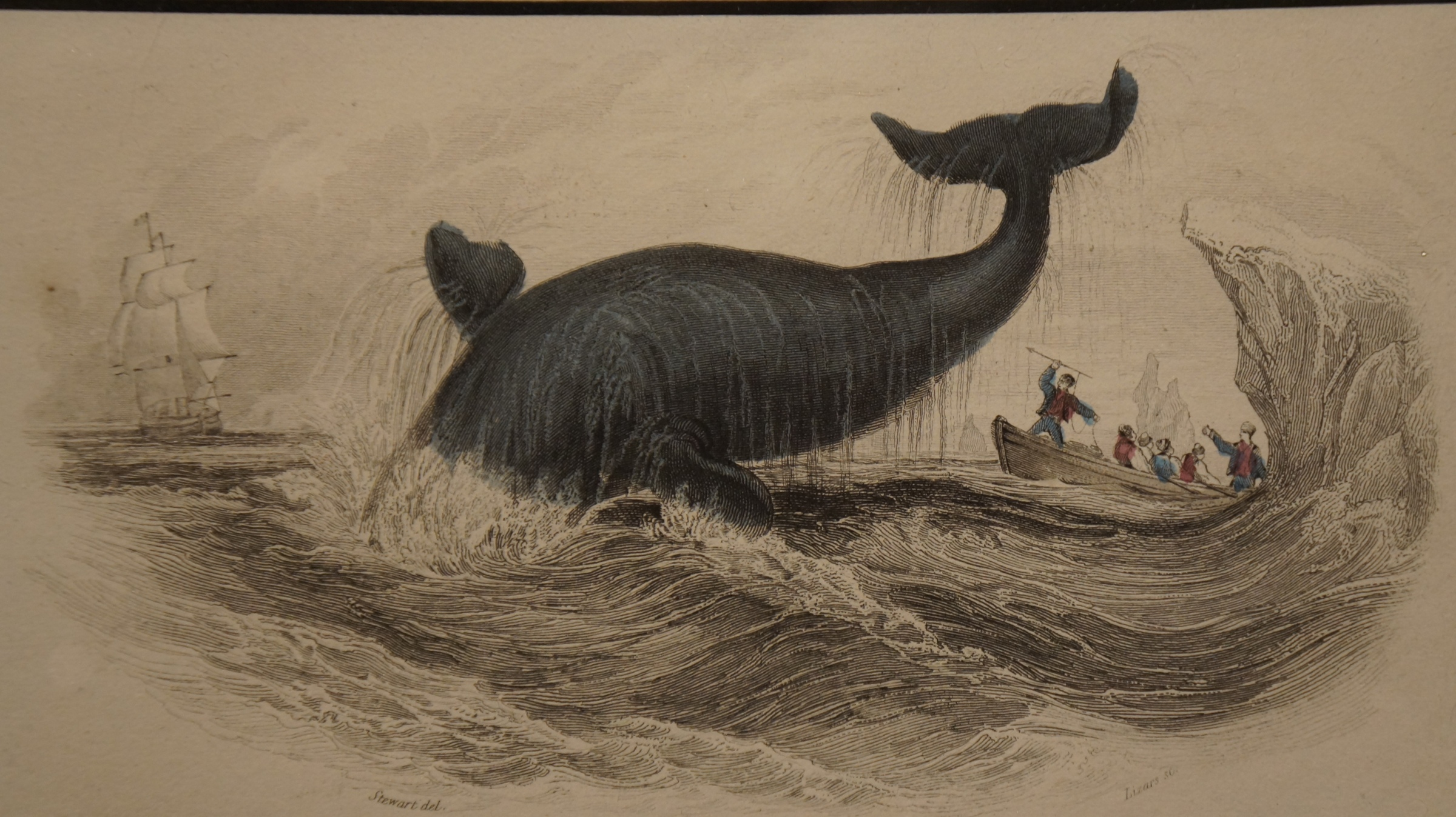 Drwaing of diving whale